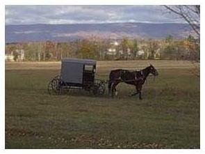 Amish Links